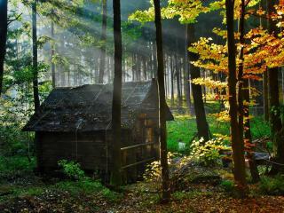 обои Деревянный домик лесника фото