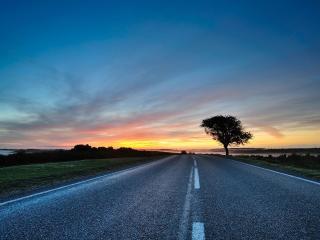 обои Одинокое дерево у дороги фото