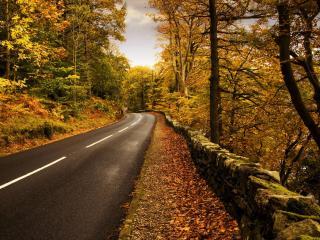 обои Осенняя дорога в лесном массиве фото
