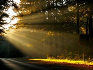 обои Рассвет на лесной дороге фото