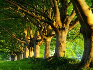 обои Деревья словно статуи высаженные в ряд фото