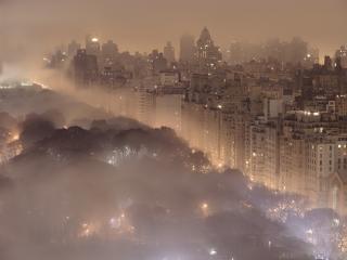 обои Туман над парком фото