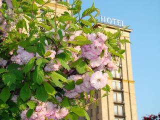 обои Весна в городе фото