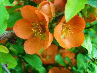 обои Цветение весеннее фото