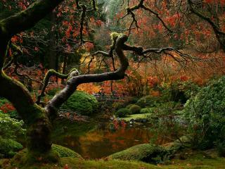 обои Кустарники и мох у лесного озера фото