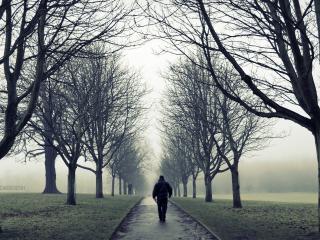 обои Прогулка туманной аллеей фото