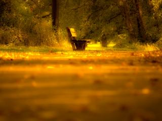 обои Скамейка  и лес в лучах света фото