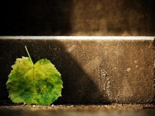 обои Пожелтевший листочек у бетонных ступенек фото
