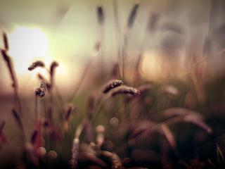 обои Размытость травинок на закате фото