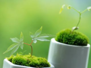 обои Ростки растений в горшочках фото