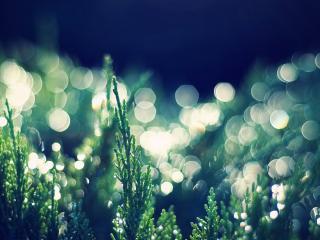 обои Световые блики в траве фото