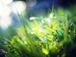 обои Солнечные зайчики в густой траве фото
