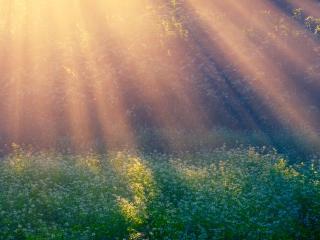 обои Утренняя поляна в сиянии солнца фото