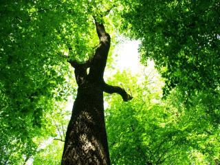 обои Царство зелени деревьев, лето фото
