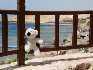 обои для рабочего стола: Плюшевый мишка в египте на отдыхе