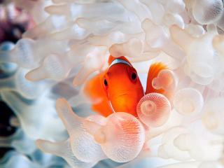 обои Рыбка в море фото