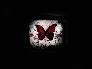 обои Черный фон и бабочка в крови фото