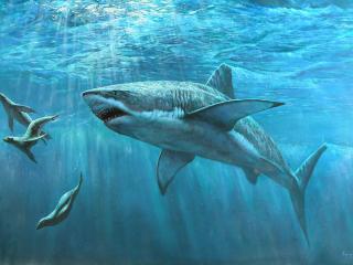 обои Морские котики добыча акулы фото