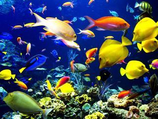 обои Мир разноцветный под водой фото