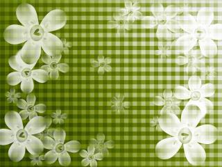 обои Белые цветы на клетчатом фоне фото