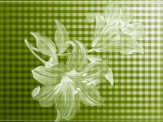 обои Две лилии на клетчатом фоне фото