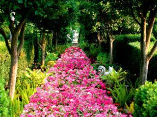 обои Аллея розовых цветов фото