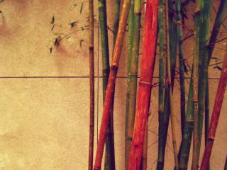 обои Бамбук разных цветов у стены фото