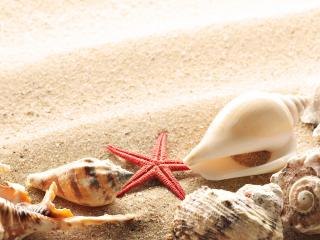 обои Ракушки на песке фото