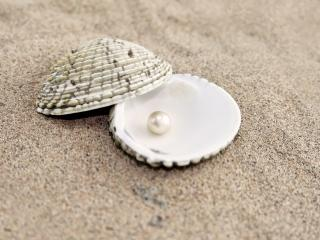 обои Ракушка с жемчужиной на песке фото
