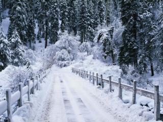 обои Заснеженный зимний тракт фото