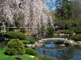 обои Парк в японском стиле фото