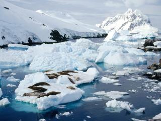 обои Стайка тюленей на обломках льда фото
