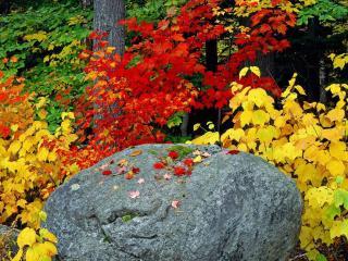 обои Камень в цветах фото