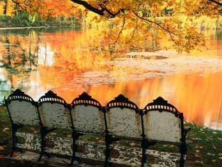 обои Скамейка в осеннем парке фото