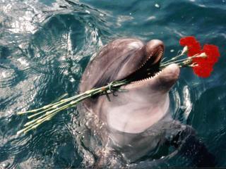 обои Дельфин с цветами фото