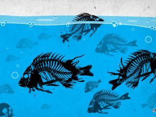 обои Скелеты рыбок в воде фото