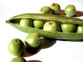 обои Зелёный стручок с яблоками фото
