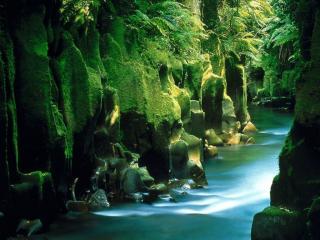 обои Речка в Новой Зеландии фото