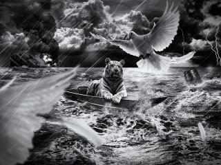 обои Лев попал в стихию,    голубь ему поможет фото