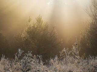 обои Искрящееся утро весны фото