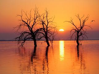 обои Затопленные деревья фото