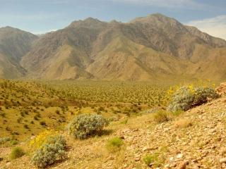 обои Цветение пустыни - Просто горы фото