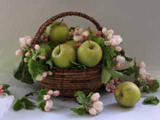 обои Натюрморт - Яблоки с цветками в корзинке фото