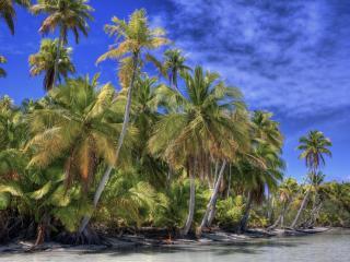 обои Пальмовая роща у берега фото
