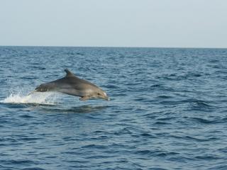 обои Маленький дельфинчик фото