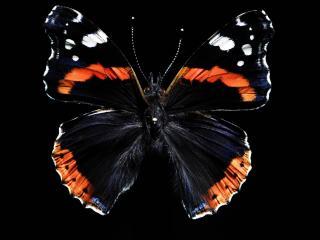 обои Красивая бабочка на темном фоне фото