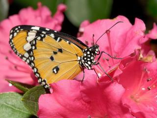 обои Розовый цветок и бабочка фото