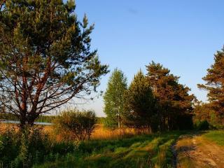 обои Дорога в сосновый лес фото