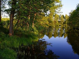 обои Лесной пруд летом фото