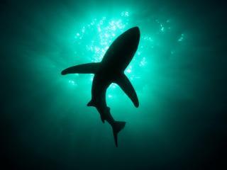 обои Бездна морская и хищница фото